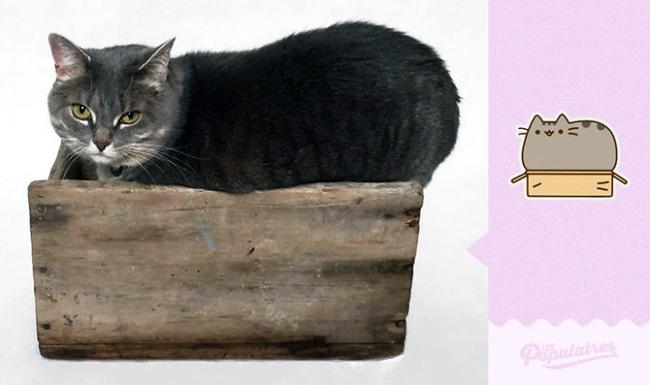 Đã tìm thấy chú mèo béo Pusheen phiên bản đời thực - Ảnh 10.