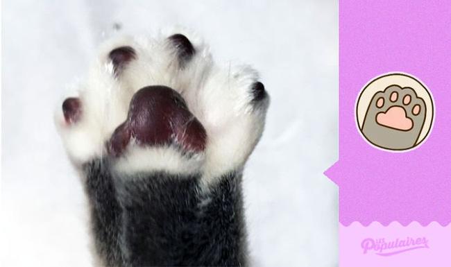Đã tìm thấy chú mèo béo Pusheen phiên bản đời thực - Ảnh 12.