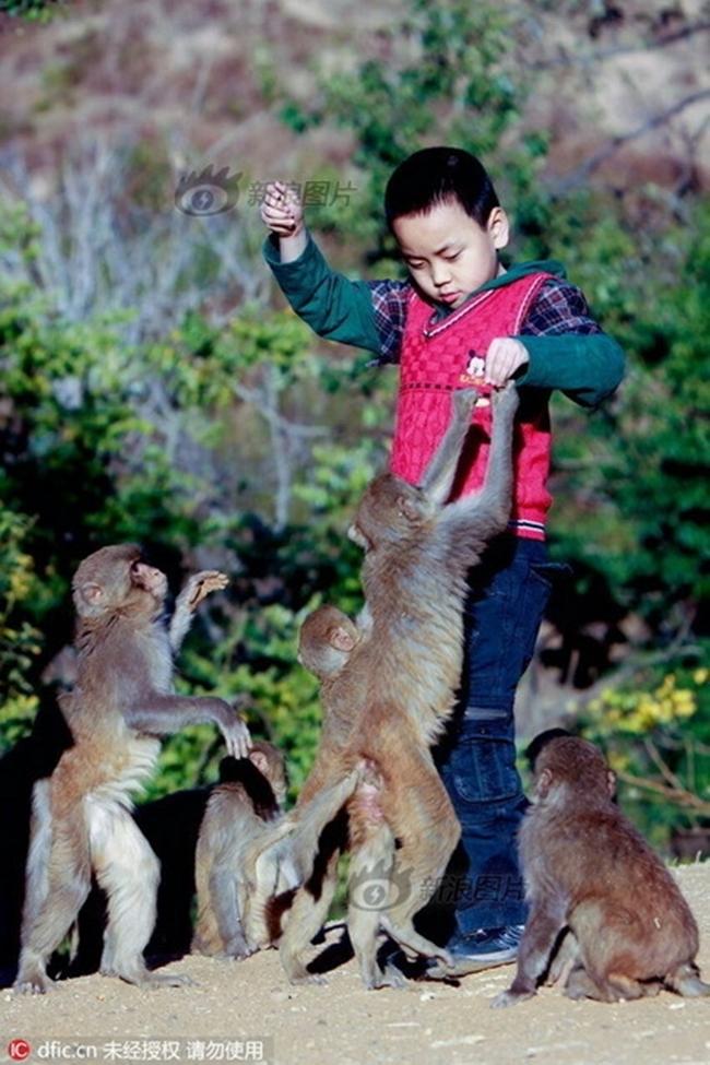 Đắng lòng người đàn ông dụ khỉ về làng làm xiếc, ngờ đâu bị chúng chiếm núi xưng Vương - Ảnh 3.