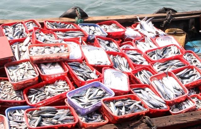 Ngành chức năng đã kiểm nghiệm và phát hiện chất Phenol cực độc trong cá nục tại kho đông lạnh được mua ngay sau thời điểm cá chết