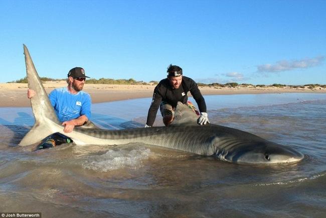 Thanh niên xuống biển kéo cá mập lên bờ chụp ảnh - Ảnh 3.