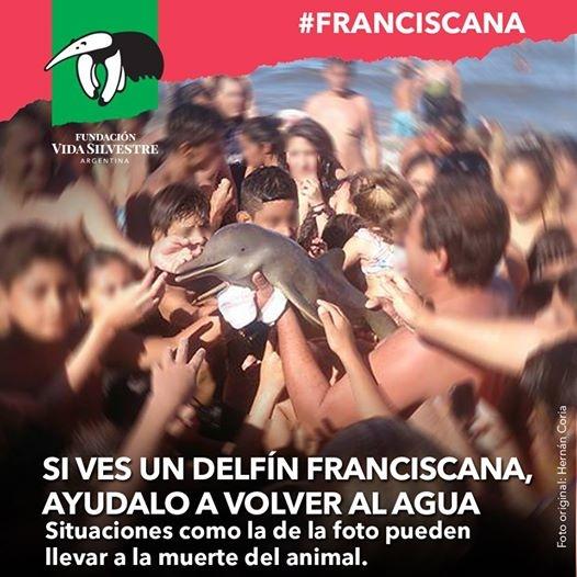 Thanh niên xuống biển kéo cá mập lên bờ chụp ảnh - Ảnh 4.
