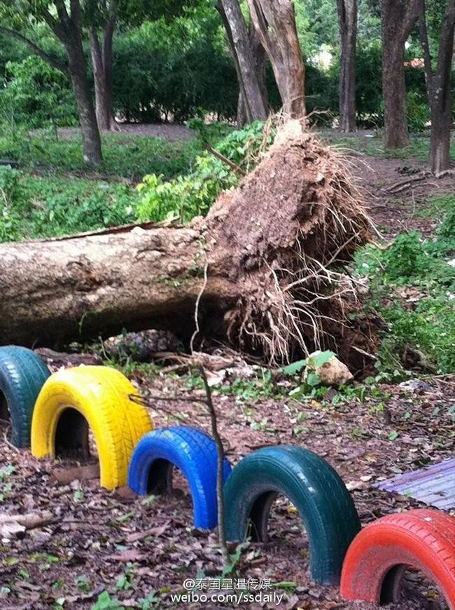 Thái Lan: Cây cổ thụ bật rễ, 52 con khỉ chết lăn lóc khi đang say ngủ - Ảnh 4.