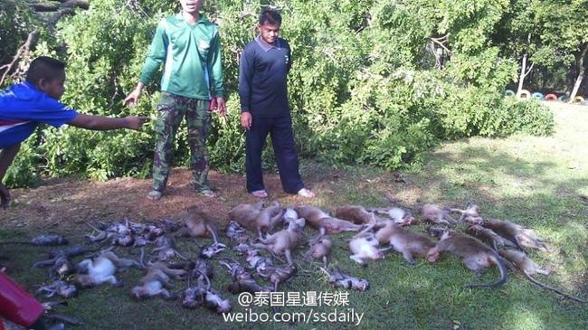 Thái Lan: Cây cổ thụ bật rễ, 52 con khỉ chết lăn lóc khi đang say ngủ - Ảnh 5.