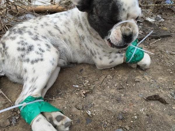 Người đàn ông 3 lần không ngại hy sinh tính mạng mình để giải cứu những chú chó từ lò mổ - Ảnh 4.