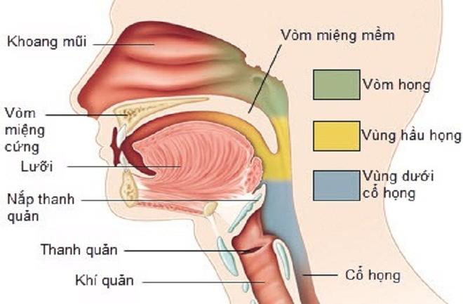 Sốc: Bé gái bị ung thư vòm họng vì hít khói thuốc thụ động - Ảnh 4.