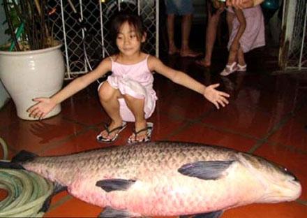 cần thủ, cá trắm, cá chép, Hồ Tây, thủy quái, cá khủng, ốc ma, ốc Hồ Tây, cá ma, ngư dân,