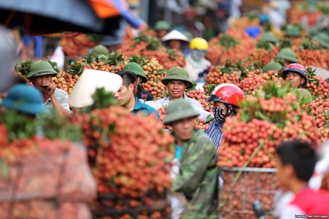 24h qua ảnh: Cảnh chợ vải thiều Việt Nam lên báo nước ngoài - Ảnh 3.