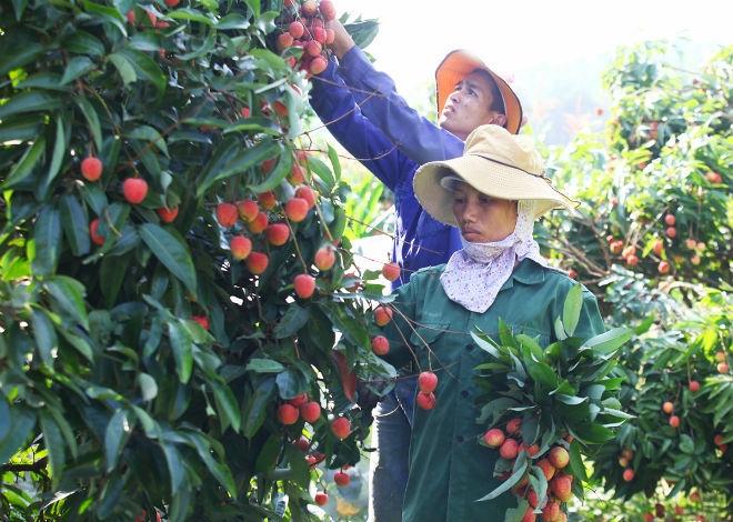 Nghề bẻ vải thuê đắt khách ở Bắc Giang