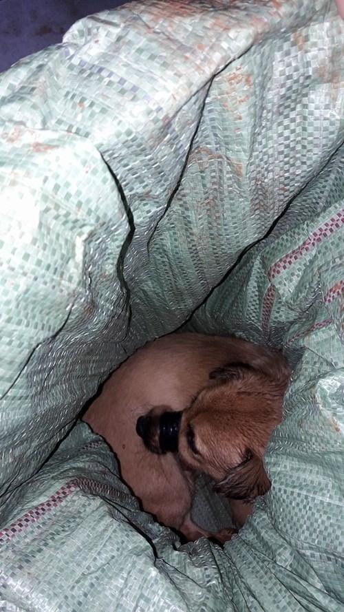 Trộm chó tấn công công an xã bằng tên bắn chó - ảnh 2