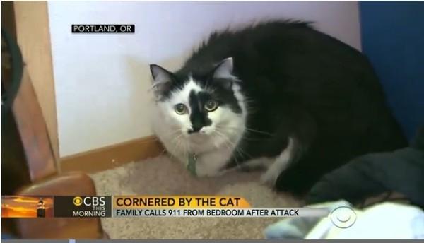 Vợ chồng cầu cứu cảnh sát vì bị mèo... bắt cóc - 2