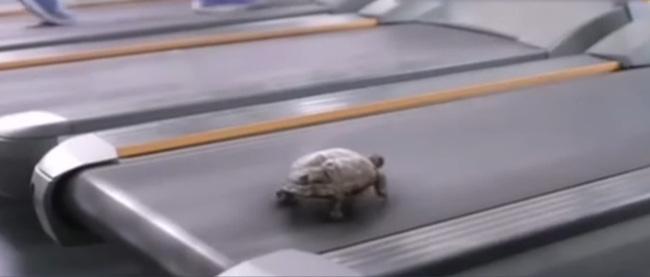 Xem xong đoạn video này, ai còn dám nói là chậm như rùa nữa đây? - Ảnh 2.