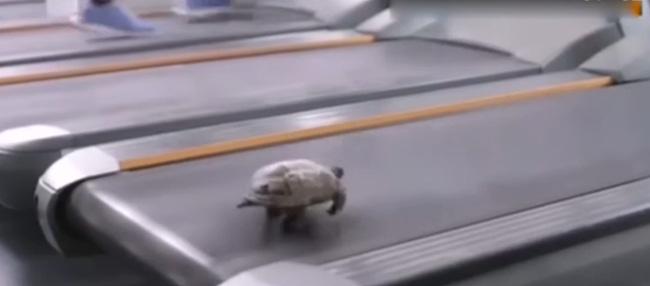 Xem xong đoạn video này, ai còn dám nói là chậm như rùa nữa đây? - Ảnh 3.