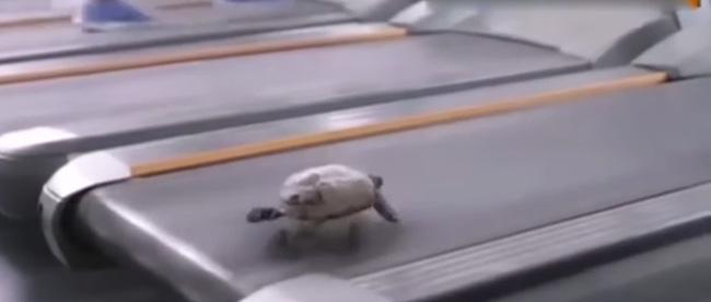 Xem xong đoạn video này, ai còn dám nói là chậm như rùa nữa đây? - Ảnh 4.