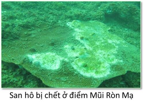 Bộ ảnh đáy biển miền Trung sau sự cố môi trường - ảnh 1