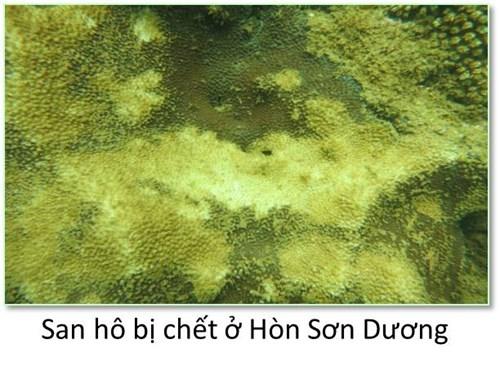Bộ ảnh đáy biển miền Trung sau sự cố môi trường - ảnh 2