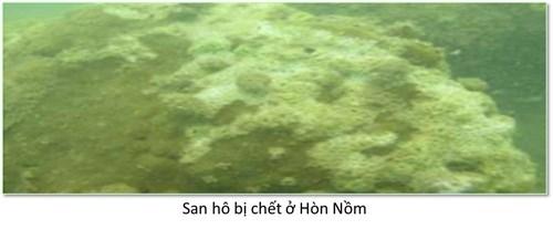 Bộ ảnh đáy biển miền Trung sau sự cố môi trường - ảnh 5
