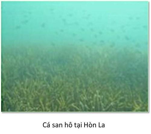 Bộ ảnh đáy biển miền Trung sau sự cố môi trường - ảnh 6