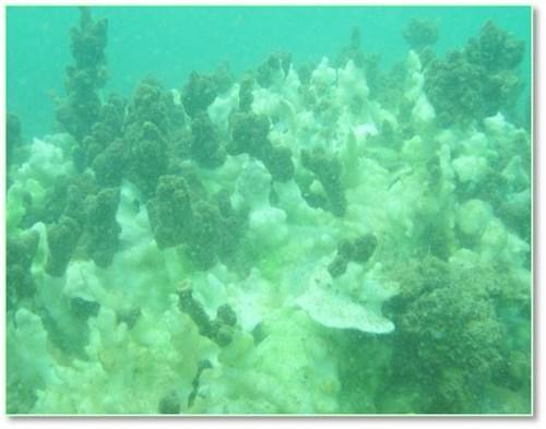 Bộ ảnh đáy biển miền Trung sau sự cố môi trường - ảnh 11