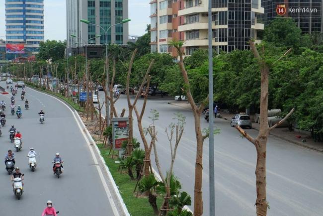 Tranh cãi về việc trồng cây phượng đỏ ở dải phân cách trên nhiều tuyến phố Hà Nội - Ảnh 1.