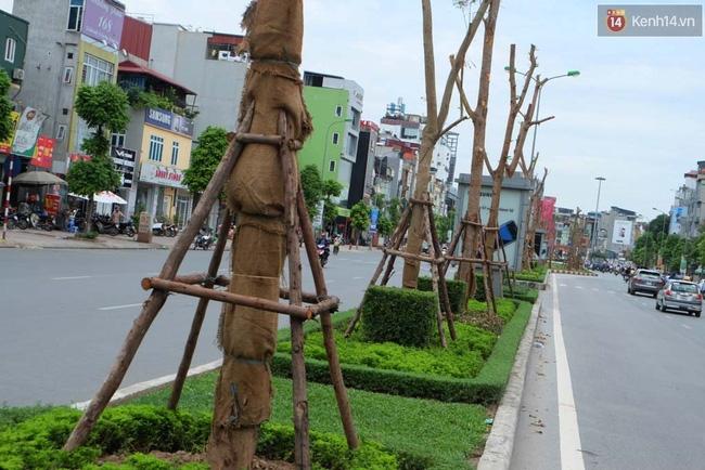Tranh cãi về việc trồng cây phượng đỏ ở dải phân cách trên nhiều tuyến phố Hà Nội - Ảnh 8.