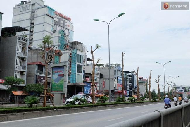 Tranh cãi về việc trồng cây phượng đỏ ở dải phân cách trên nhiều tuyến phố Hà Nội - Ảnh 11.