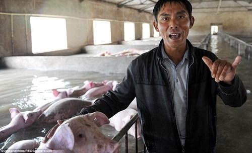 Nông dân khóc ròng nhìn 3.000 con lợn chìm trong nước lũ - ảnh 2