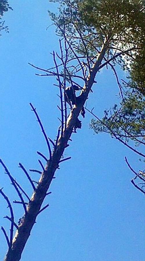 Người đàn ông chết đứng trong khi leo cây nhưng không ai biết cho tới 8 tháng sau - Ảnh 1.