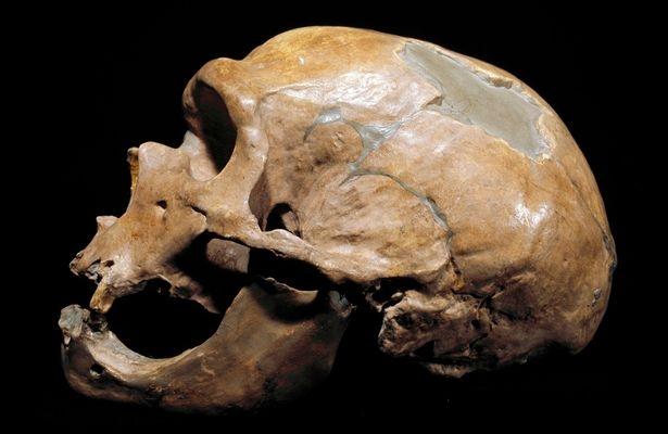 Bỉ: Phát hiện tộc người ăn thịt lẫn nhau 40.000 năm trước - 3