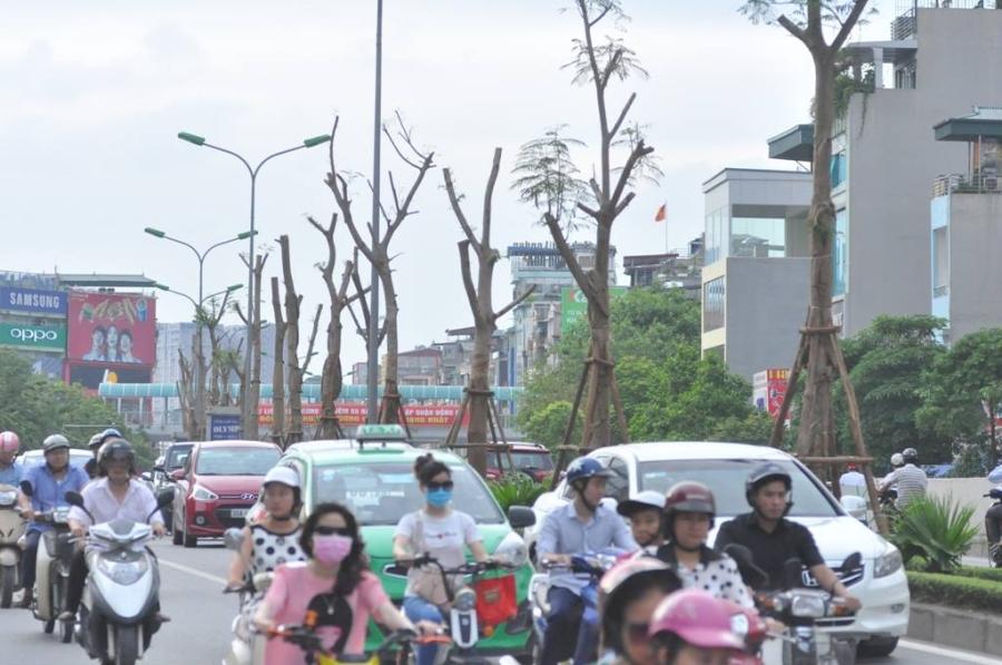 GS Nguyễn Lân Hùng: Hà Nội rất phù hợp trồng phượng - 1