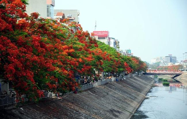 GS Nguyễn Lân Hùng: Hà Nội rất phù hợp trồng phượng - 2