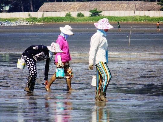 Người dân huyện Cần Giờ, TP HCM đang nhặt nghêu ở bãi biển.