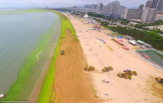 Ảnh: Tảo sinh sôi đột biến, phủ xanh lè bờ biển ở TQ - 6