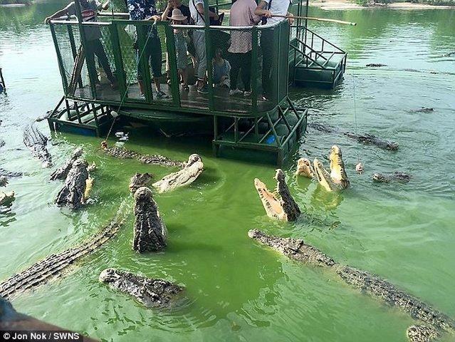 Rợn người du khách TQ dùng bè tạm bợ cho bầy cá sấu ăn - 3