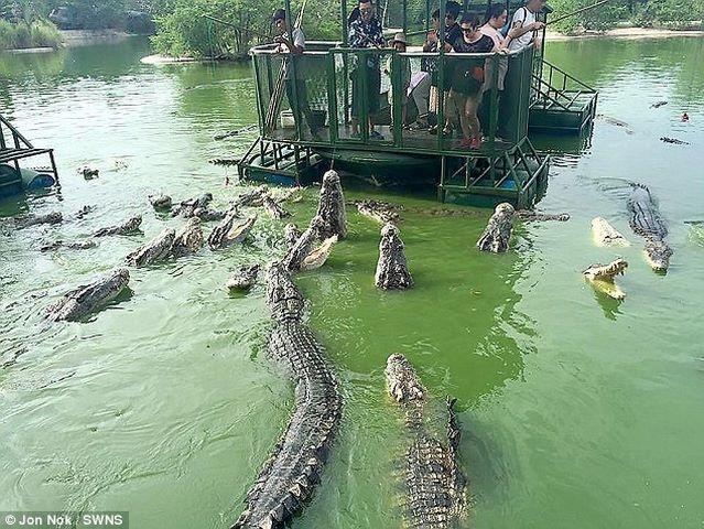 Rợn người du khách TQ dùng bè tạm bợ cho bầy cá sấu ăn - 4