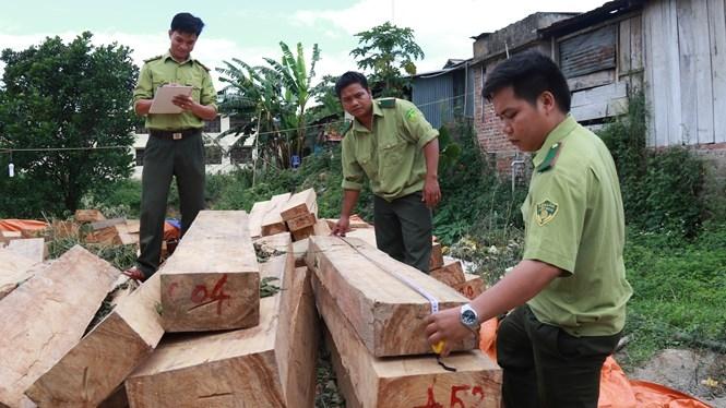 Vụ phá rừng Pơmu nghiêm trọng ở Nam Giang đang có nhiều diễn biến mới /// CÔNG THÀNH