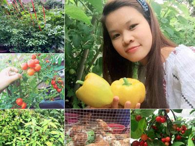 """Mẹ Việt 9X trồng rau quả tốt um nhờ bã thuốc bắc """"thần thánh"""""""