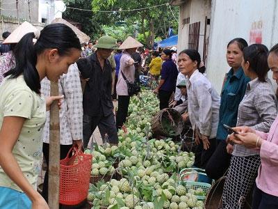 Na Lạng Sơn hạ giá, người trồng vẫn có lãi