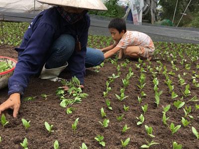 Cay đắng phận trồng rau