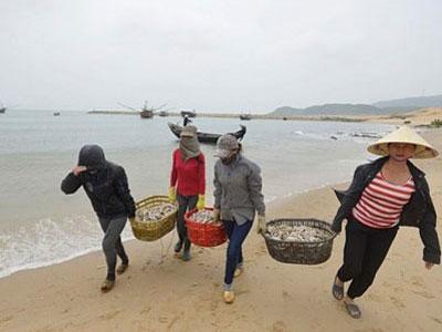 Triển khai bồi thường thiệt hại vụ Formosa đầu độc biển