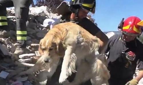 Chú chó Romeo được giải cứu sau 9 ngày mắc kẹt vì động đất ở Italy. Ảnh: AFP.