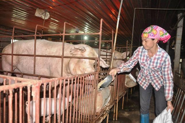 Chất cấm mới phát hiện trong chăn nuôi độc hại thế nào? - 1