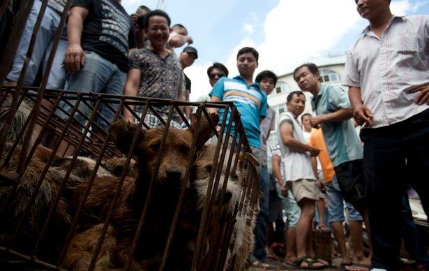 Thảm cảnh những chú chó bị luộc sống tại các lò mổ Trung Quốc - Ảnh 3.