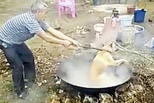 Thảm cảnh những chú chó bị luộc sống tại các lò mổ Trung Quốc - Ảnh 4.