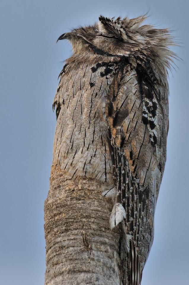 Chú chim biến thành... thân cây trong tích tắc - 1