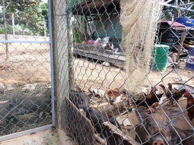 Các chuồng nuôi lợn gà