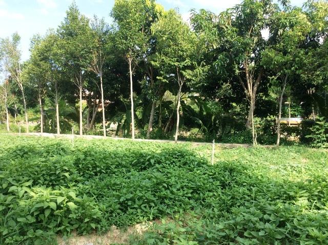 Vườn cây và rau.