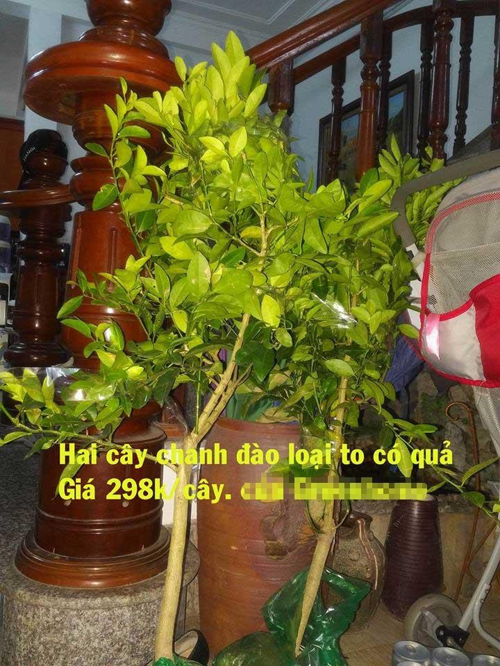 mua cây giống, mua cây giống online. mua hàng online, khách hàng bị lừa, mua chanh đào, bán hàng online, Greenhome
