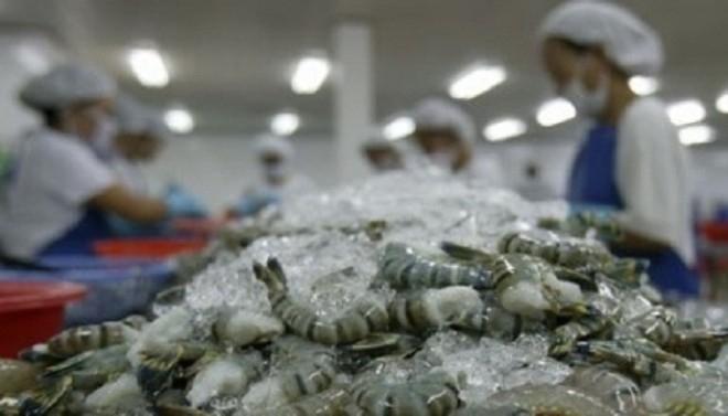 Image result for Mỹ chính thức tăng thuế chống bán phá giá tôm Việt