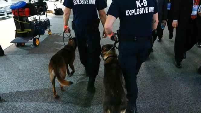 Đội cảnh khuyển K-9 của Mỹ đã thất bại trong nhiều bài kiểm tra đánh hơi chất nổ ở các sân bay lớn /// Reuters
